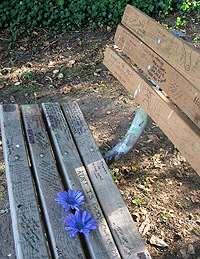 Bänk till minne av Kurt Cobain i Viretta Park.