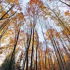 Trädtoppar.