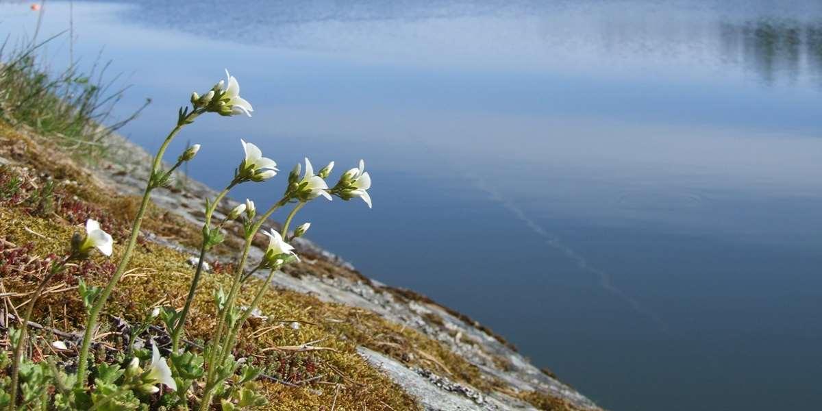 Blommor och klippor vid havet.